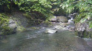smallforest shiori 1